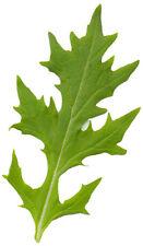 150 graines de MIZUNA(Brassica Rapa Nipposinica)H854 JAPANESE MUSTARD SEEDS SEMI