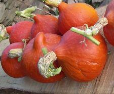 Pumpkin POTIMARRON FRENCH Variety 12 SEEDS.