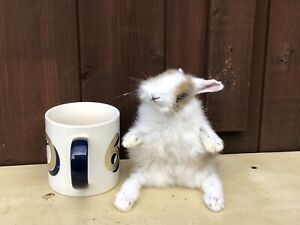 TAXIDERMY Rabbit Baby Free Standing