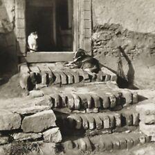 1927/56 Original JOSEF SUDEK Cat Dog Animals Porch Scene Vintage Photo Gravure