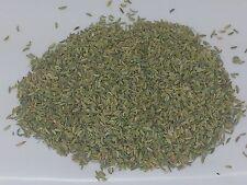 100% biologico Fennel Semi 100g Loose essiccato a base di erbe erba spezie erbe saltadorio