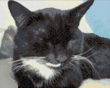 Sleeping Black & White Cat - Animal Cross Stitch Kit - 14 Count Aida, Anchor