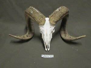 Ram skull hill country outdoors rustic decor dirty yard work SR0735