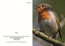 Greeting cards Robin