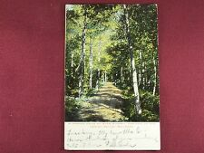 Glen Summit Springs, Lehigh Valley Railroad Vintage postcard Shaded Drive 1905
