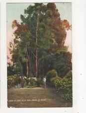 Jardin De Corvo Moya Gran Canaria Las Palmas Spain 1911 Postcard 677b