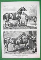 HORSES Prussian Stallions Duke of Edinburgh Marsworth - VICTORIAN Antique Print