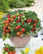 Strawberry Full Sun Fruit Plants