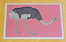 WELCOME TO THE MUSEUM - ANIMALIUM POSTCARD - COMMON OSTRICH - KATIE SCOTT - NEW