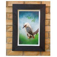 Australian Made Frame Hand painted W Native Bird 3D Kookaburra Wall Art Hanging