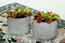 Planta carnivora semillas frescas ecologicas seeds autentica