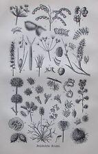 1898 ANHÄKELNDE FRÜCHTE alter Druck antique Print Lithographie Frucht