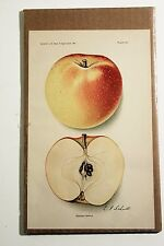 Antique Fruit Print 1913 BANANA APPLE by Schutt Color Lithograph USDA Engraved