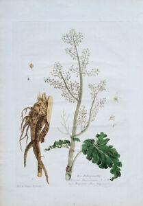 Regnault, Nicolas Francois (1746-1810) › Rapontie