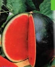 Rare Seeds Early Watermelon Tyulpan Russian Organically Grown Heirloom