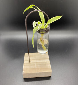 Hydroponic Home Decor One Lab Pot Display Flowers Fronds & Stems Great Gift