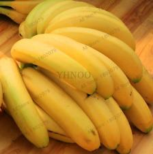 È innamorato di palme qualcosa di molto speciale è la rosa banane-Palma.