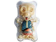 4D Master Gummi Bear Skeleton Anatomy Model Kit Clear