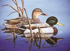 Royal & Langnickel Blue Water Mallards - Large Paint by Numbers