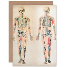 Human Body Anatomy Skeleton Muscles Card With Envelope