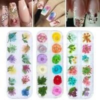 12 Colours/Box Nail 3D Art Dried Dry Flowers Gel False Nails Tips Manicure