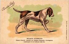 CPA Braque Allemand, chien d'arrét DOGS (729597)