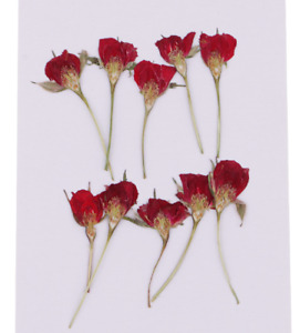 10 Pieces Pressed Real Dried Flower Half Cut Rose for DIY Home Ornament Resin