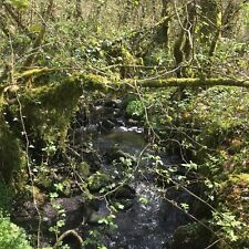 Woodland for sale 3 acres 15 minutes from J48 M4