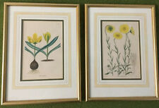 Pair Of 1850's Hand-Colored Botanical Prints, Framed + Matted, English Flowers