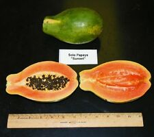 ~Sunset Papaya~ STRAWBERRY RED PAPAYA Hybrid SOLO 60+ SEEDS TASTY UH Cultivar