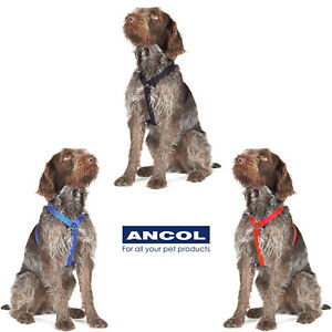 Ancol Nylon Exercise Dog Harness Puppy Red Blue Black Reflective Option
