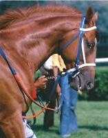 SECRETARIAT - 8X10 ORIGINAL 1973 WHITNEY STAKES HORSE RACING PHOTO!