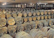 Br47522 Cognac un chat de reserve France