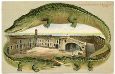 Alligator Border Florida 551 Fort Marion Court Yard Saint Augustine