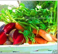 Semillas De Cinta-Feliz pot Mix 350 Semillas 5m/16ft de zanahoria remolachas Perejil 3 Cintas