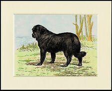 NEWFOUNDLAND DOG BY LAKE GREAT LITTLE PRINT MOUNTED READY TO FRAME