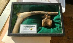 Fossil Dinosaur Rare Thescelosaurus Rib & Vertebra Hell Cr Mont. 🦕