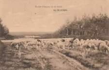 Ansichtkaart Nederland : De Steeg - Schapen op Heide (boxa0297)