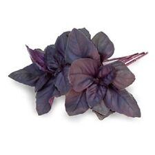 Basil 'Crimson King' / Red Genovese Basil / Aromatic Herb / 150 seeds
