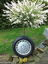 Mercedes W201 W124 190 E Gullideckel Felge 6Jx15 H2 ET49 Continental 185/65 R87H