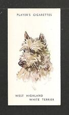 WEST HIGHLAND WHITE TERRIER  Hunting dog in Scotland 1930's print card