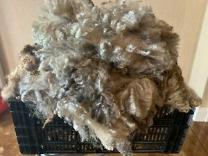 Leicester Longwool Raw Fleece - Natural Colored.. Mellie
