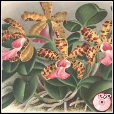 ORCHIDS Rare Old Books - J. Linden - A. Cogniaux - Beauty COLOR PLATES - 2 DVD's