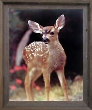 Whitetail Mule Deer Fawn Wild Animal Bathroom Wall Decor Barnwood Framed Picture