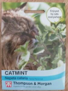 Thompson & Morgan - Flower - Catmint  'Nepeta Cataria'  225 Seeds