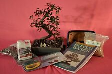 BONSAI TREE, DELUXE STARTER KITS WITH 10 YEARS OLD CHINESE ELM.