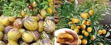 20x Mini CH Drachen Melonen Baum Saatgut Pflanze Garten Obst Samen Neuheit #164