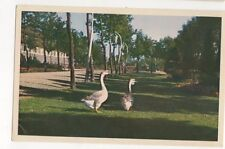 Avifauna Alpen a d Rijn Netherlanmds Postcard 178b