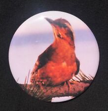 TWIN PEAKS Bird MAGNET Opening Credits DAVID LYNCH