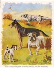 English Setter, German Shepherd, Bulldog, Fox Terrier by Bayzand, vintage 1927